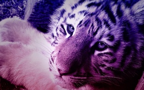 tiger, gradient, animals