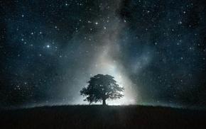 звезды, дерево, небо, поле, космос, красивые