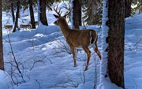 deer, snow, forest, animals