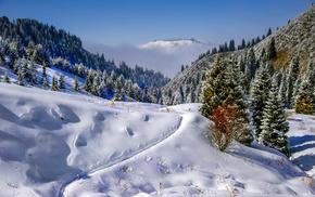 горы, зима, ели, тропинка., Обои зима, снег