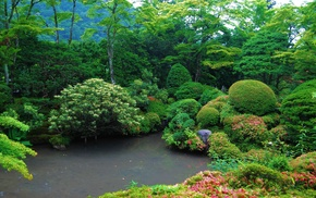 jungle, trees, lake, nature