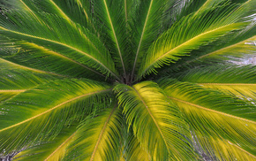 palm, green, summer, nature