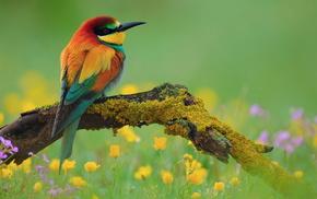 feathers, nature, bird, animals, rainbow