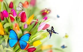 bouquet, tulips, flowers