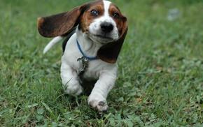 щенки, животные, собака