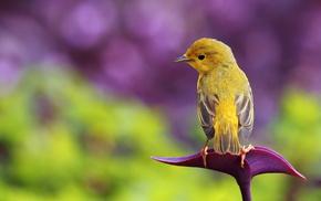 wings, animals, bird, greenery, background