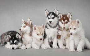 dog, puppies, animals