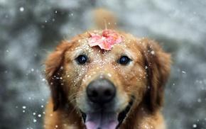 листья, животные, снег, собака