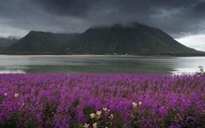 суровость, природа, горы, цветы, вода, туман