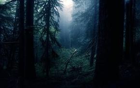 листья, лес, деревья