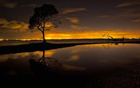 sky, stars, sunset, tree, beautiful