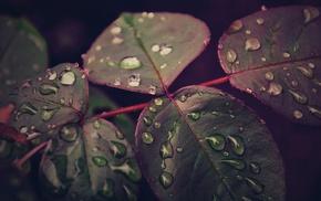 макро, природа, капли воды, листья