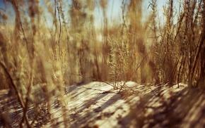природа, растения, глубина резкости, песок
