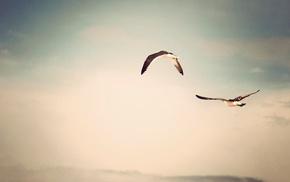 nature, sky, animals, birds