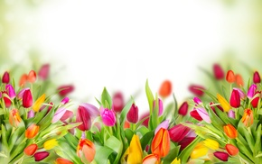 tulips, spring, background, flowers, photoshop