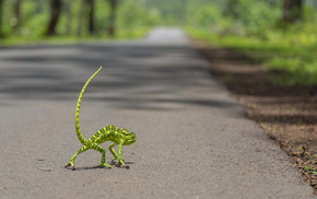 forest, road, jungle, tail, macro