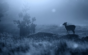 depth of field, baby animals, silhouette, blue, fawns, nature