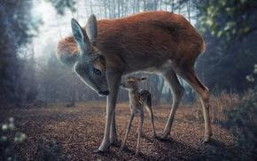 realistic, digital art, baby animals, deer, forest, animals