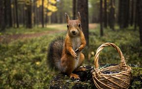 animals, basket, forest, trees, squirrel
