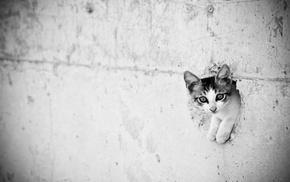 монохром, кот