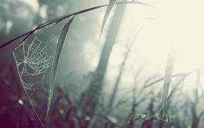 grass, spiderwebs, mist, macro