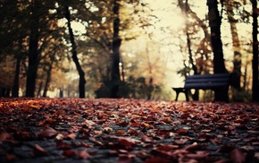 depth of field, leaves, fall, nature, bokeh, bench