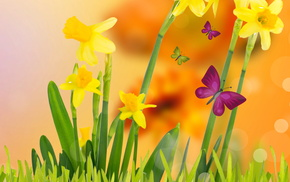 flowers, background, yellow, spring