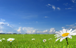 небо, ромашки, красивые, трава