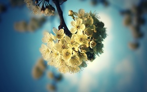 flowers, tree, background, spring