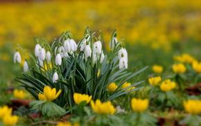 field, spring, nature, yellow, white