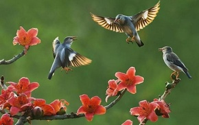 flowers, birds, tree, nature