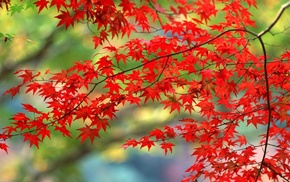 branch, Sun, greenery, stunner, foliage