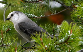 animals, bird, feathers, greenery, wings