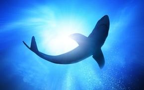 light, ocean, animals, predator, shark