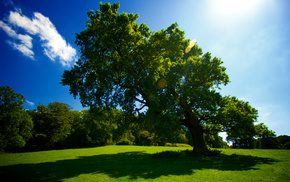 tree, sky, Sun, summer, glade