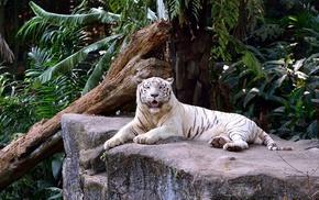 animals, jungle, stone, tiger, palm trees