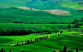 Italy, road, green, trees, nature