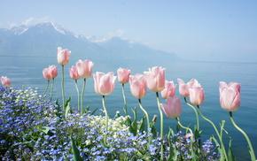 sky, lake, flowers, spring, tulips