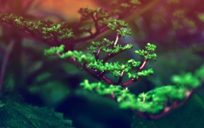 растения, природа, глубина резкости