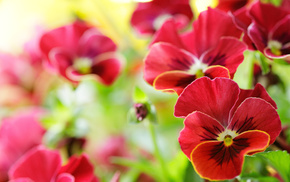 spring, red, flowers