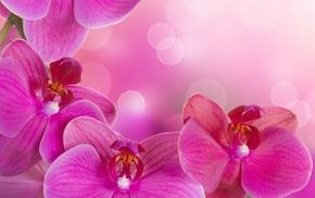 цветы, весна, фотошоп, орхидея, красивые
