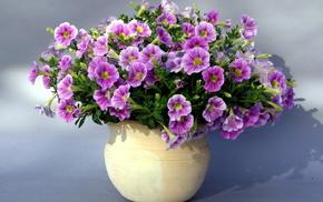 flowers, bouquet