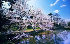 sky, clouds, park, pond, sakura