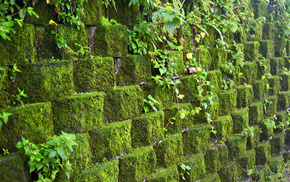 green, stone, leaves, wall, nature