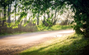 branch, grass, nature, sunlight, road, depth of field