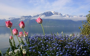 flowers, lake, sky, mountain, tulips