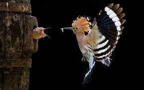 animals, bird, fly, wings