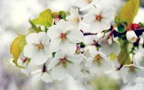 spring, bloom, tree, branch
