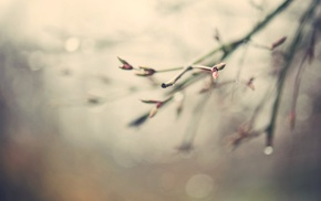 nature, twigs, macro