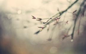 nature, twigs, macro